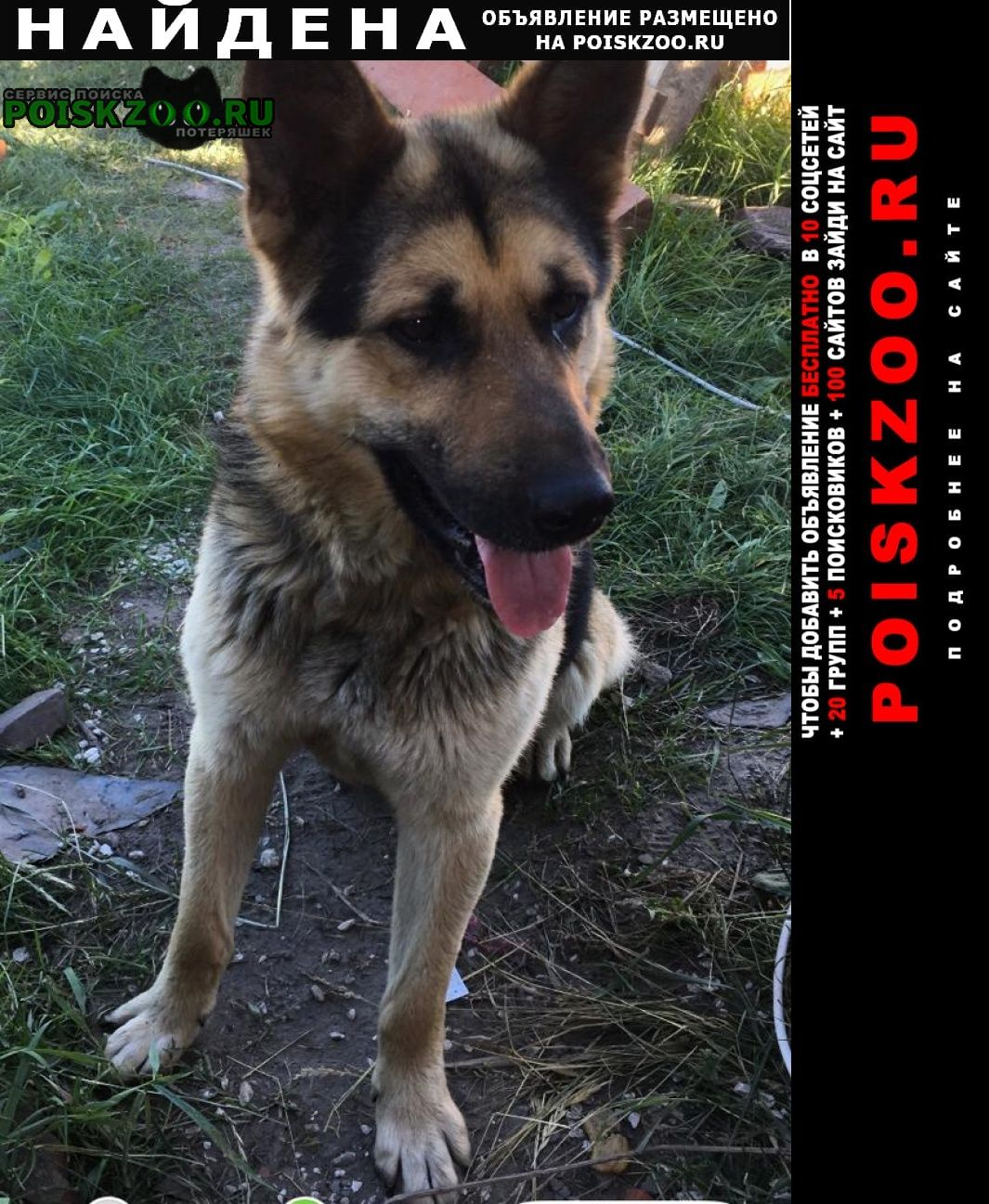 Шилово Найдена собака кобель