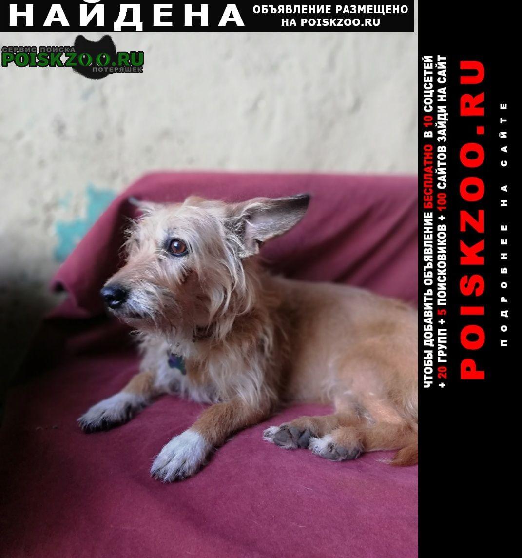 Найдена собака 13 июня 2021 Подольск