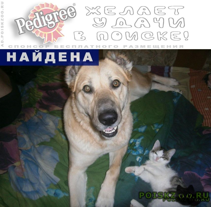 Найдена собака ищем новых или старых хозяев г.Нефтеюганск