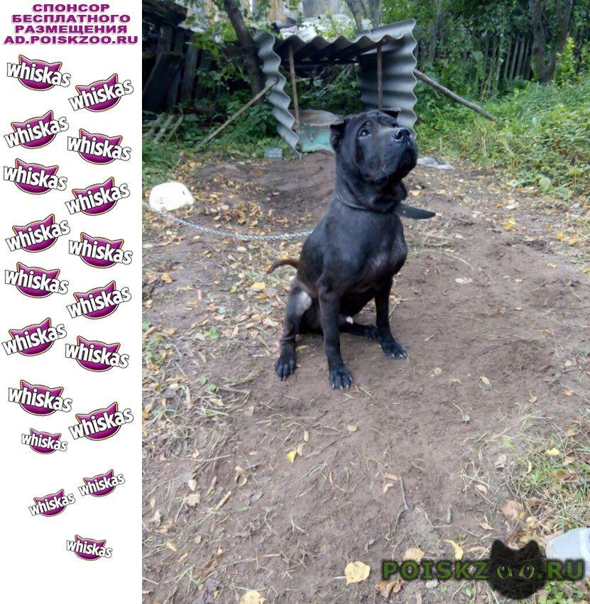 Найдена собака кобель г.Старица