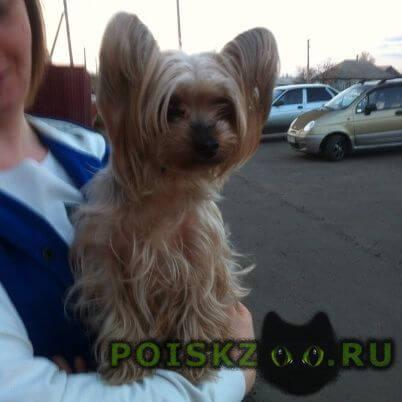 Найдена собака г.Таловая