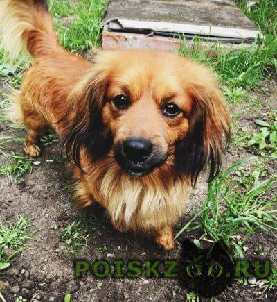 Найдена собака кобель г.Воскресенск
