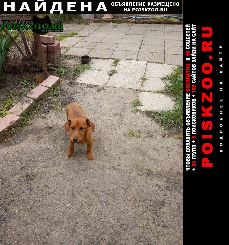 Найдена собака район стадиона Краснодар