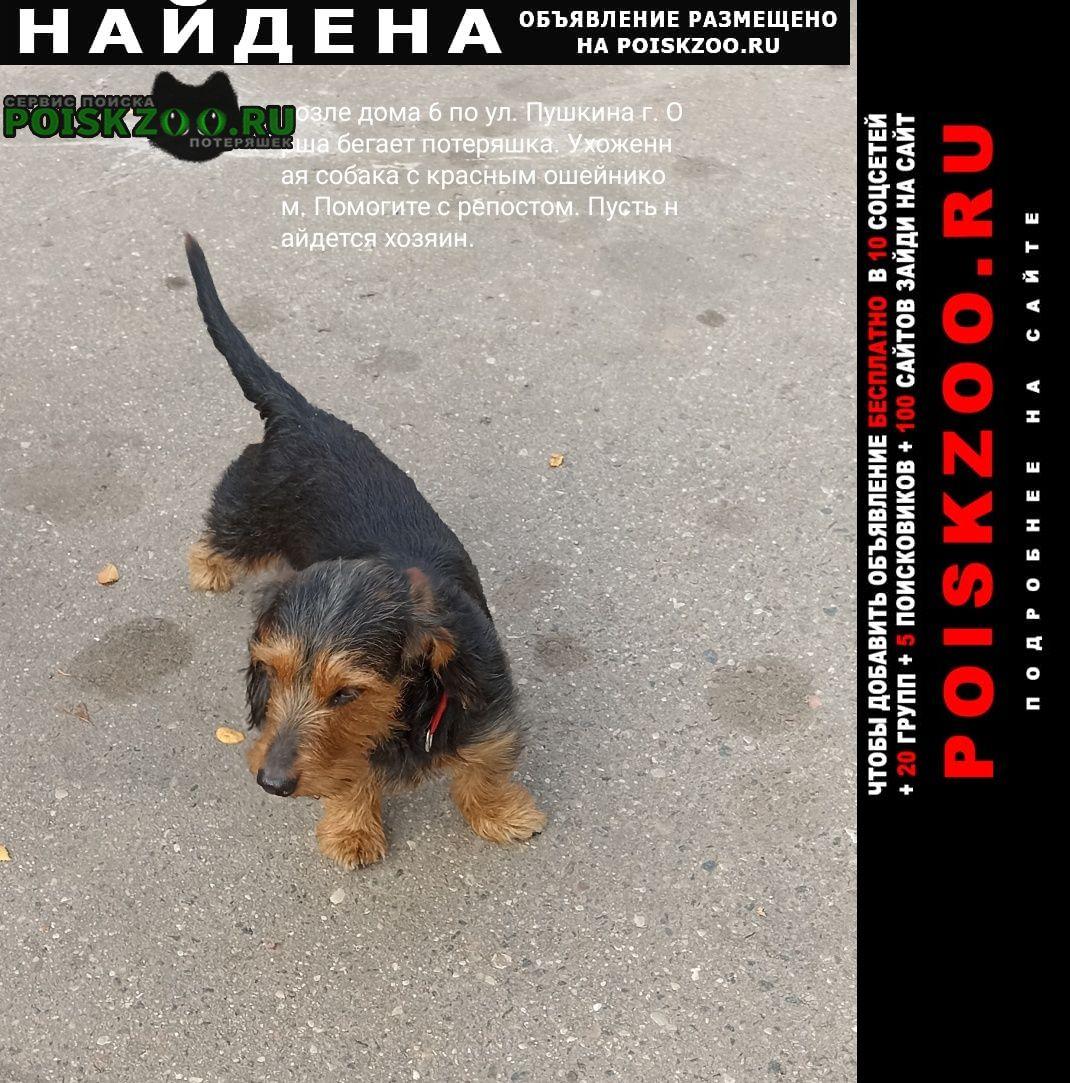 Найдена собака г, витебская обл. ул. пушкина 6 Орша