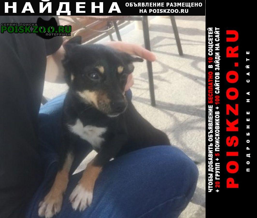 Найдена собака Анапа