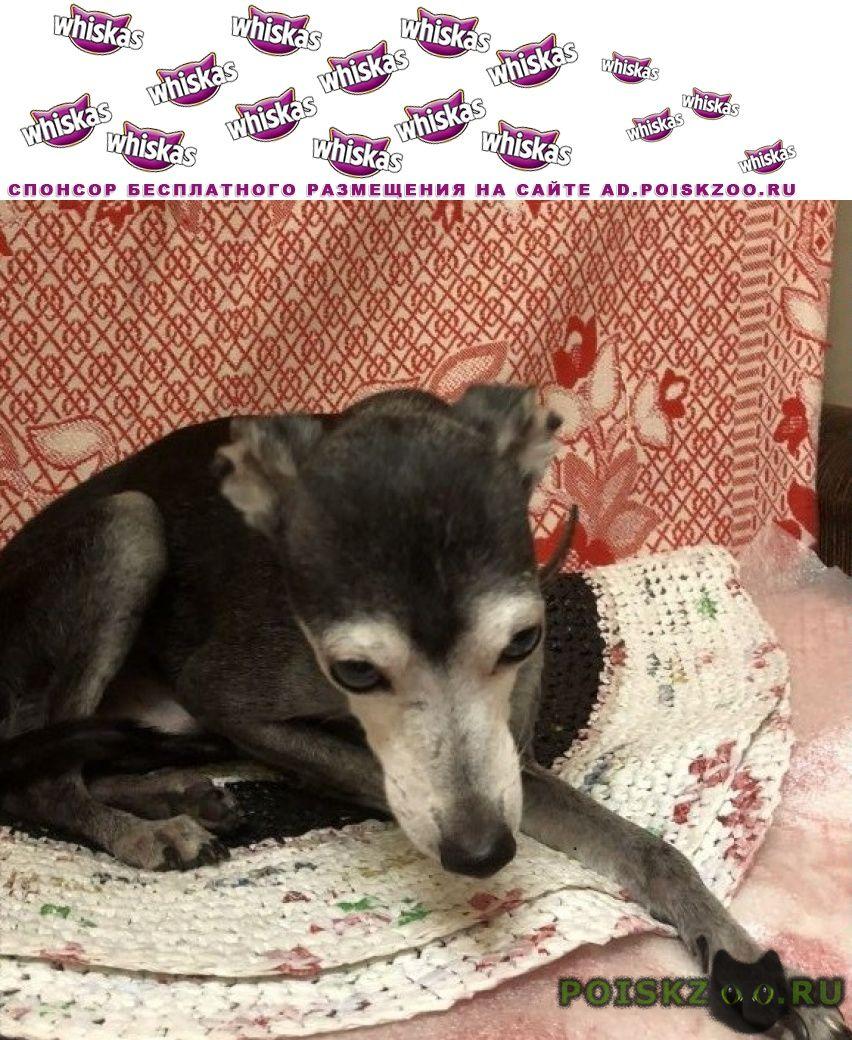 Найдена собака кобель г.Санкт-Петербург