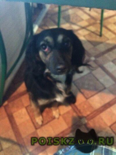 Найдена собака г.Кисловодск