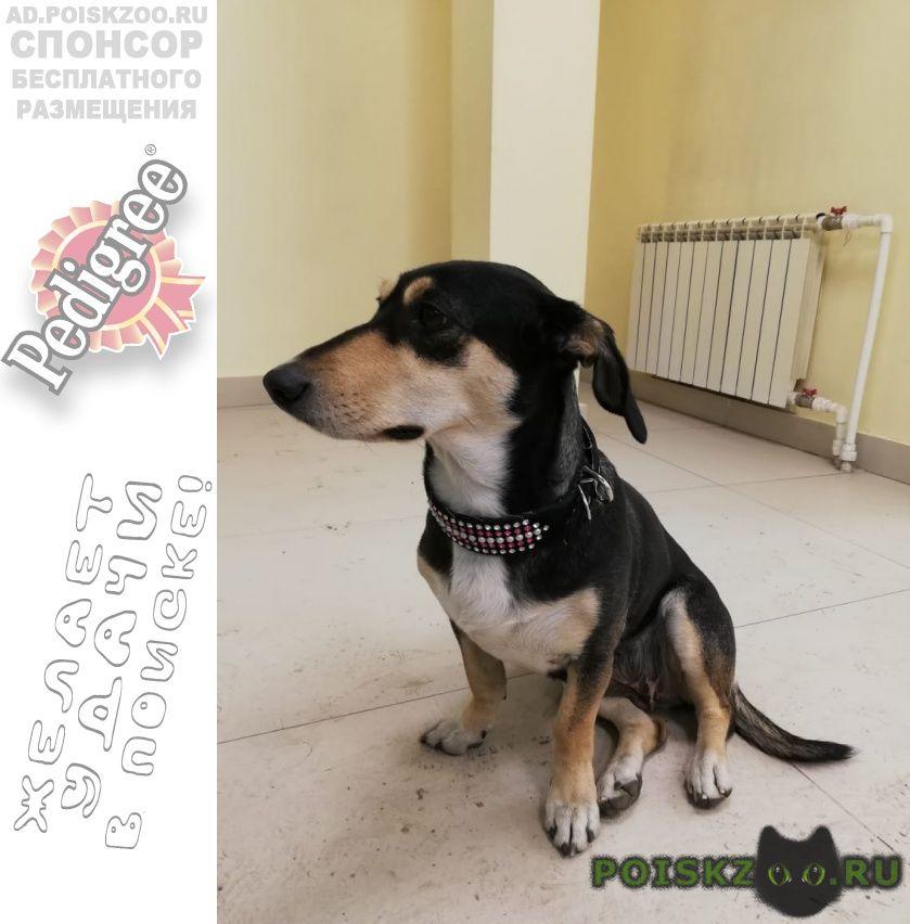 Найдена собака декабря г. г.Благовещенск (Амурская обл.)
