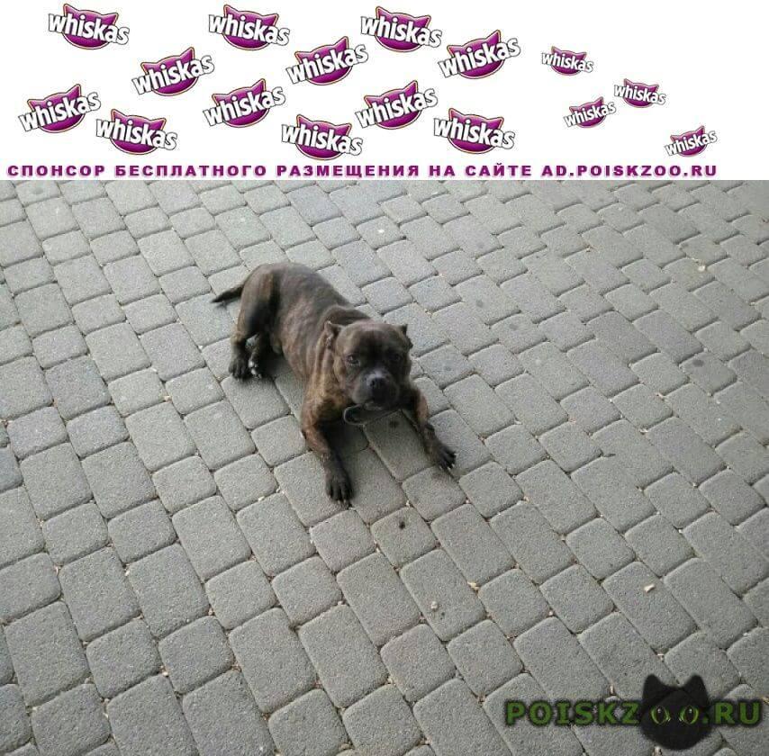 Найдена собака кобель г.Невинномысск