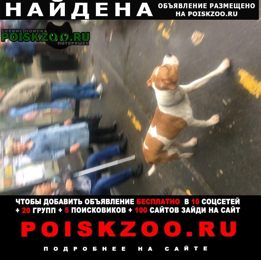 Найдена собака кобель Пушкино