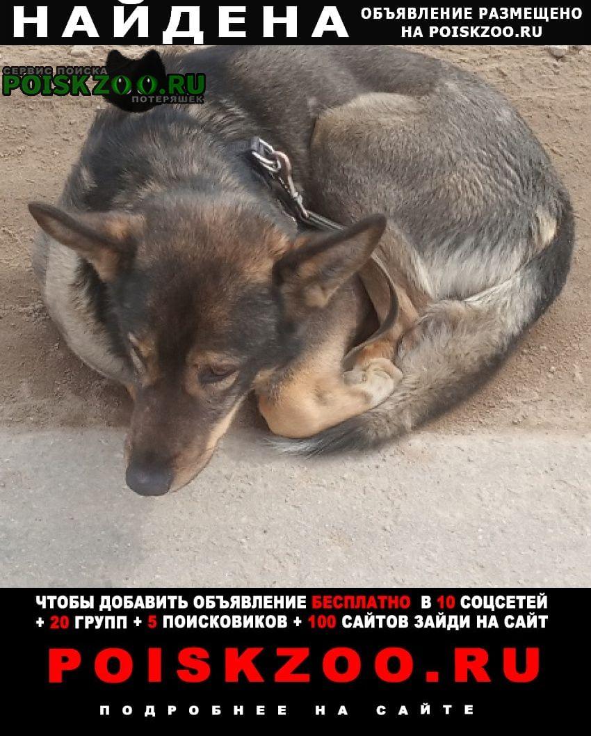 Найдена собака шапкино и луговое Нарофоминск