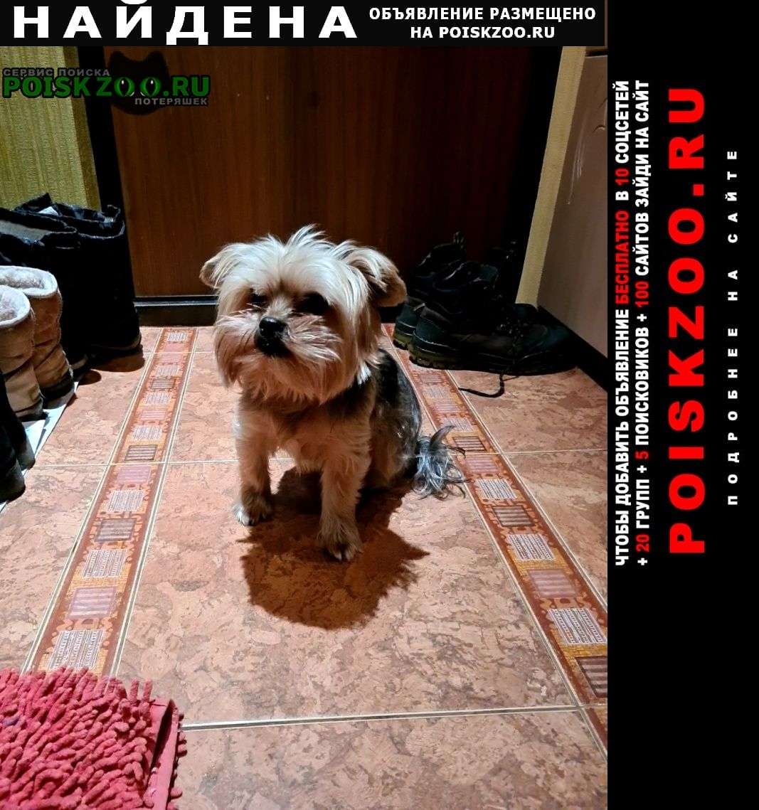 Найдена собака йорк мальчик Москва