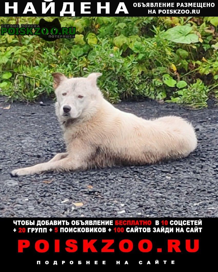 Найдена собака белая ждёт хозяев у дороги Щелково