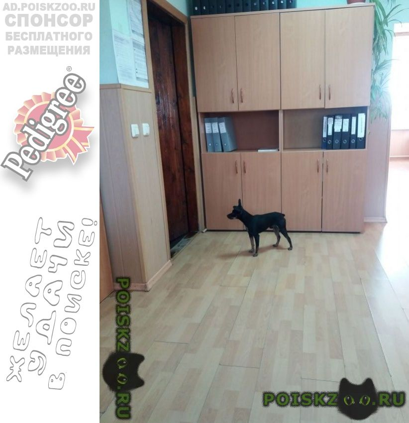 Найдена собака кобель г.Оренбург