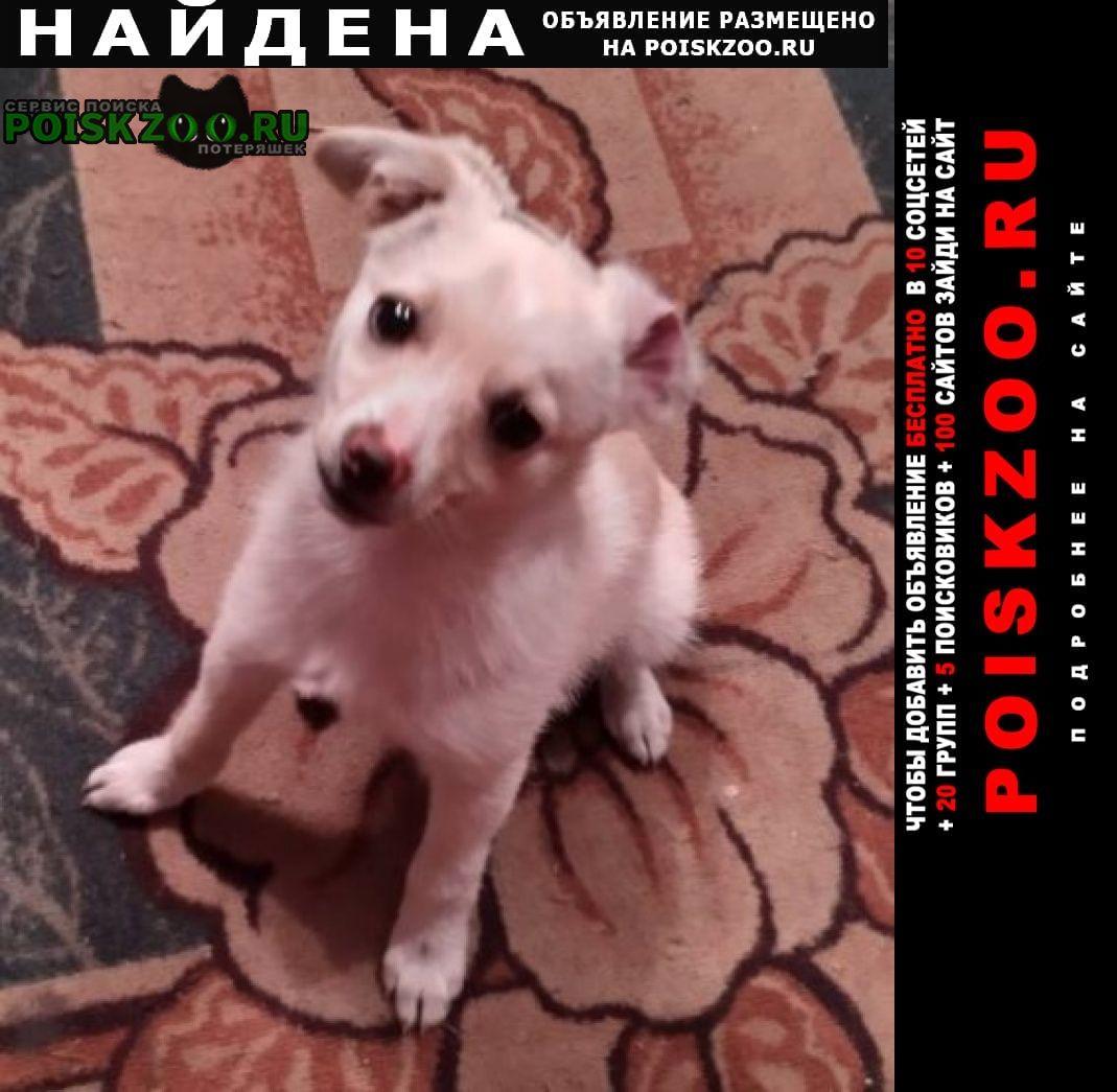 Найдена собака кобель Всеволожск