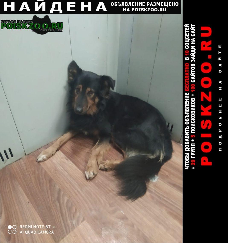 Москва Найдена собака варшавское шоссе 154