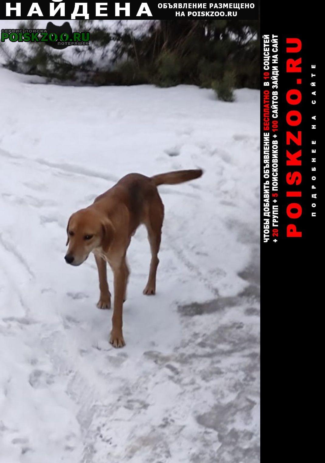 Найдена собака кобель Воронеж