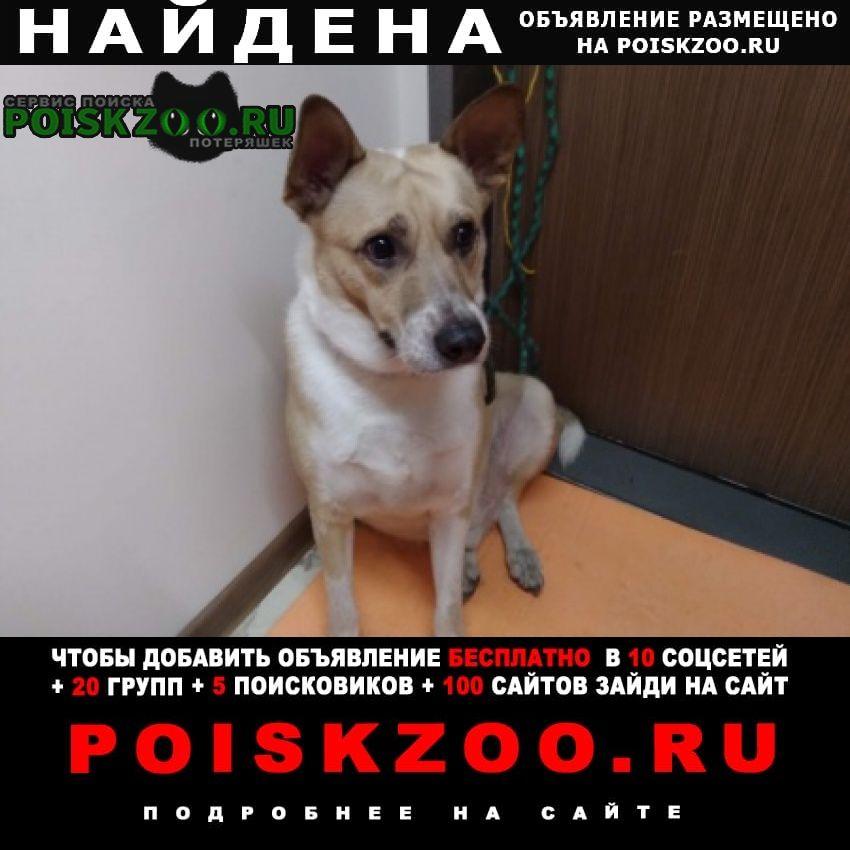 Найдена собака кобель Новокузнецк