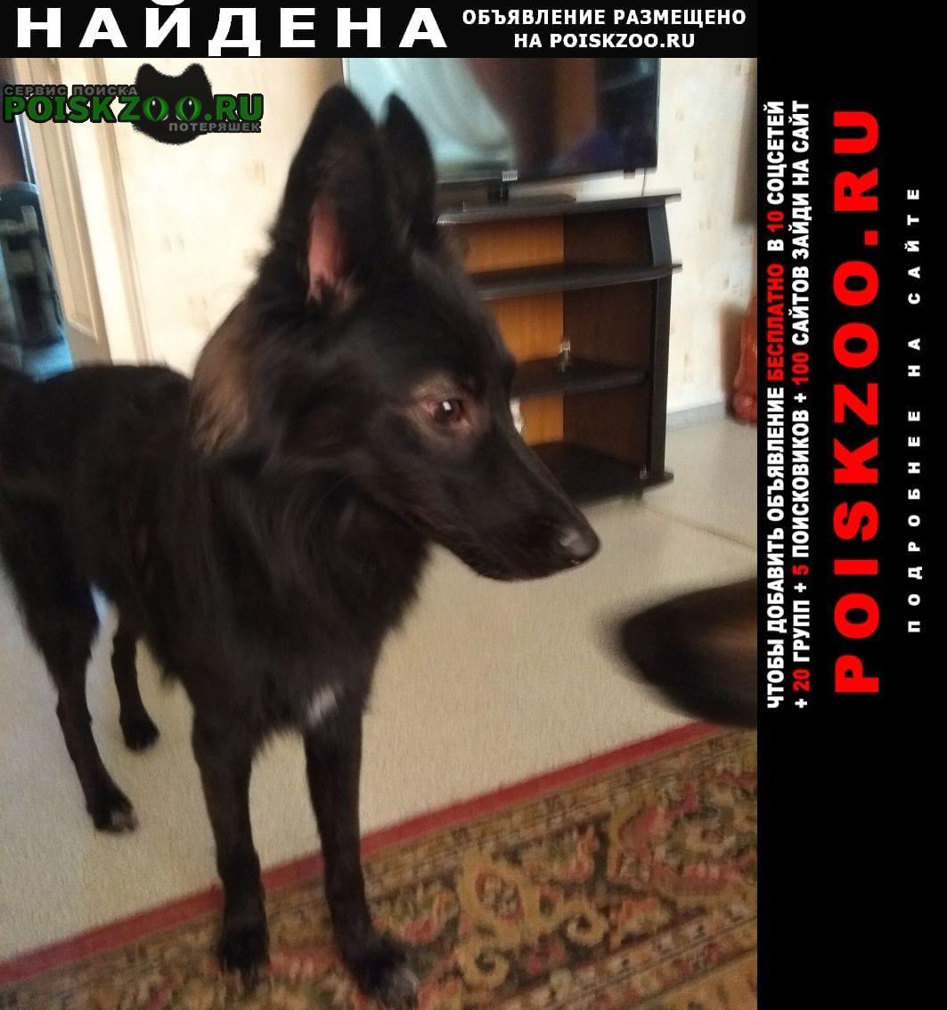 Найдена собака молодой, энергичный кобелек Москва
