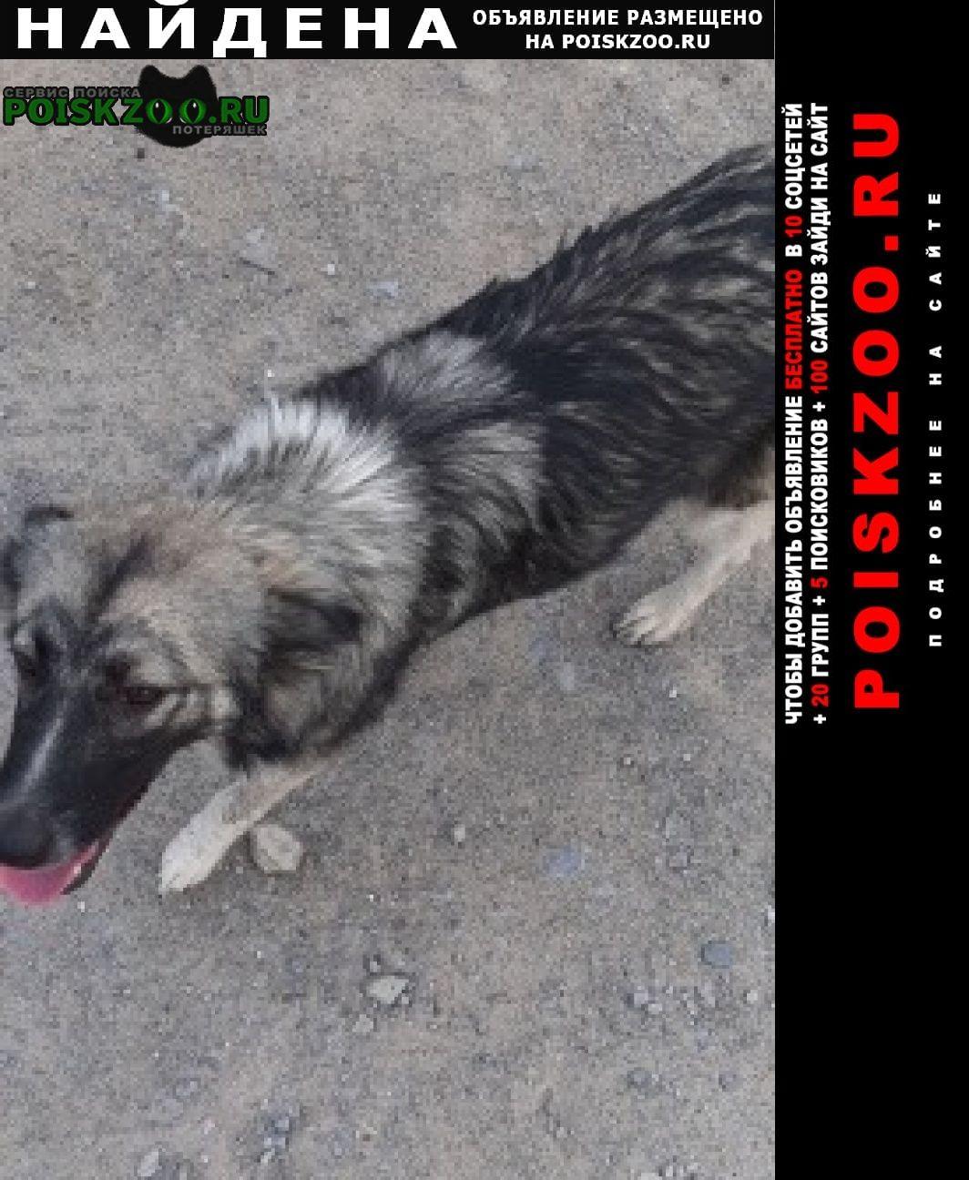Найдена собака девочка, очень ласковая. Волгоград
