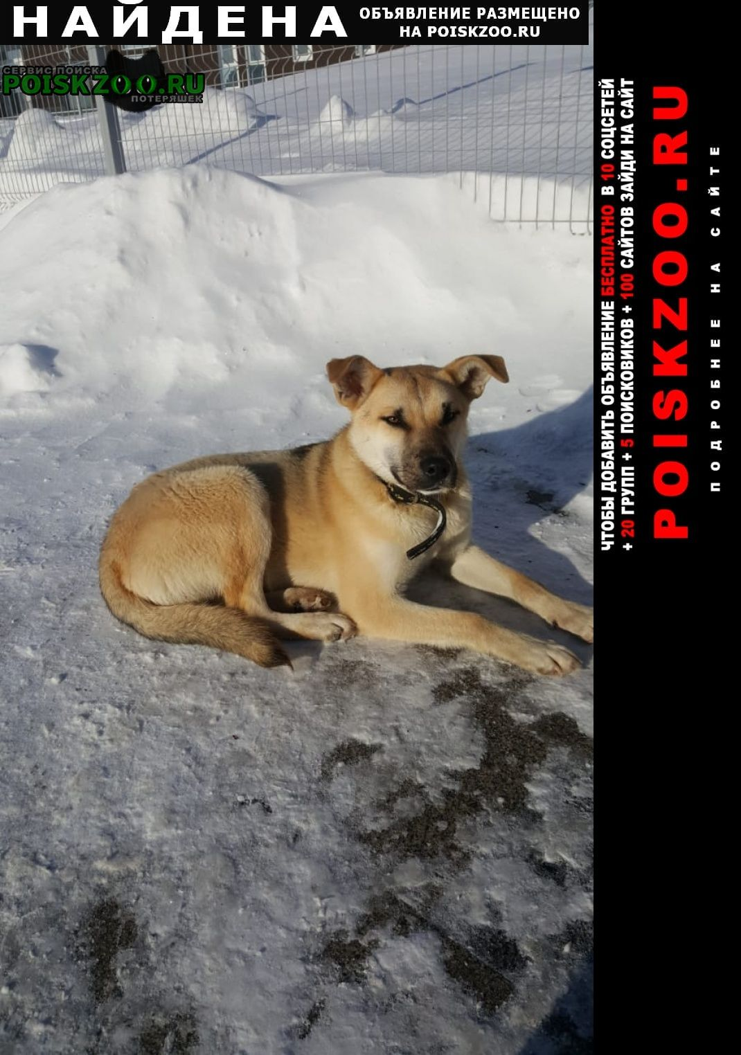 Найдена собака коммунарка Москва
