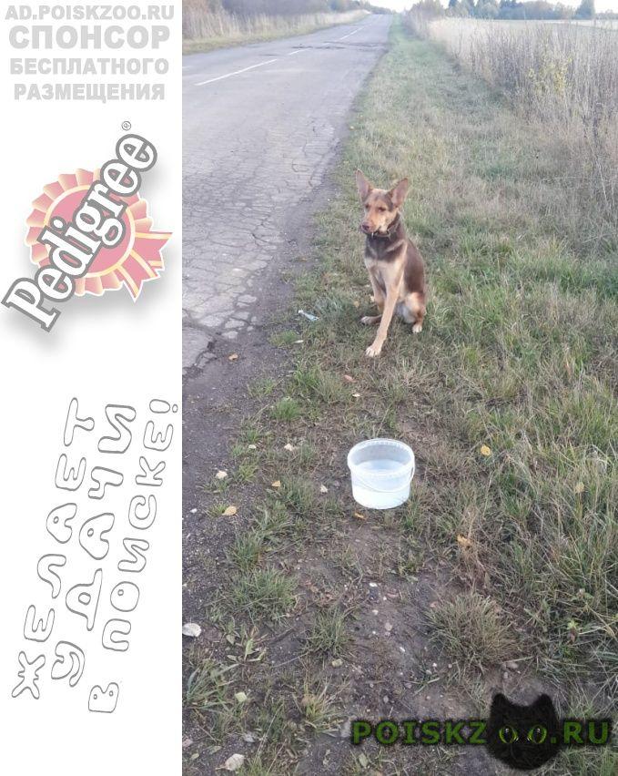 Найдена собака г.Волоколамск