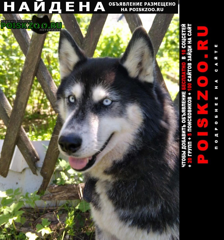Найдена собака Пушкино