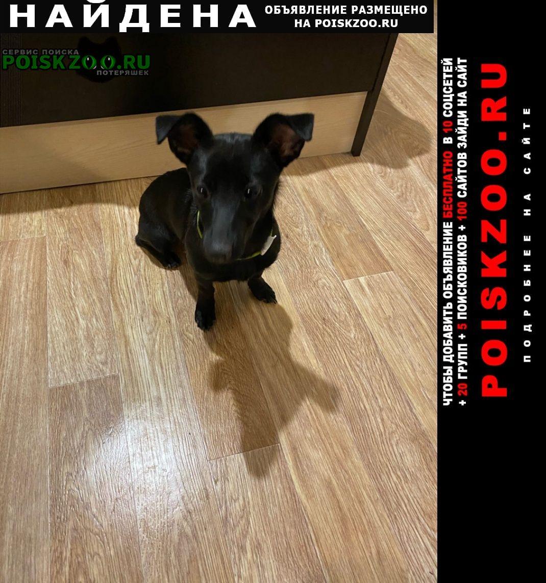 Найдена собака на кмр маленькая черная собачка Краснодар