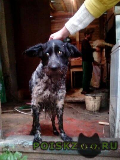 Найдена собака кобель г.Нижний Новгород