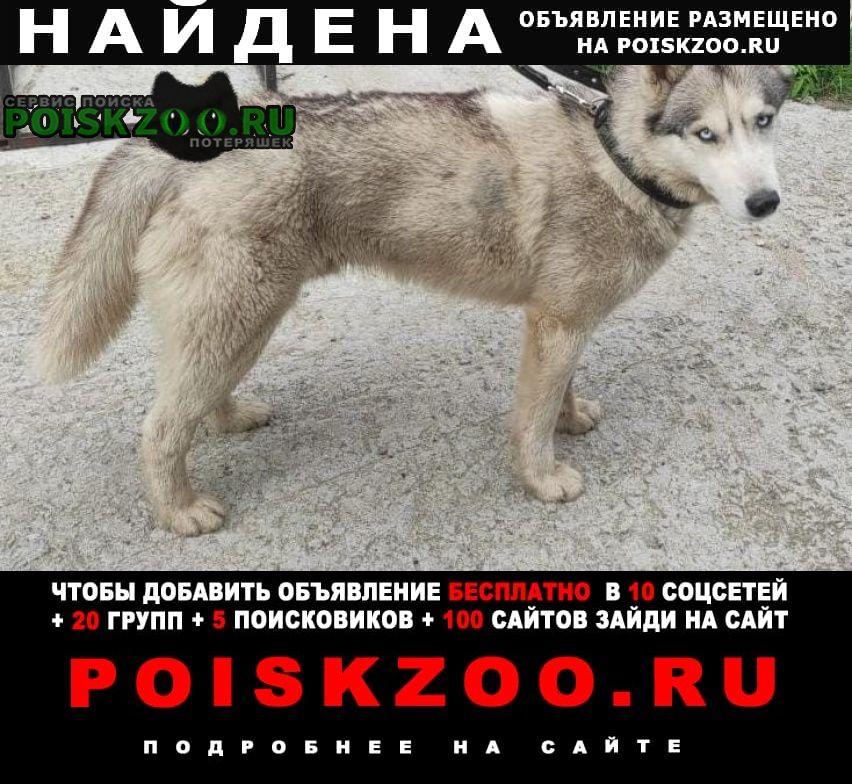 Найдена собака кобель Михнево