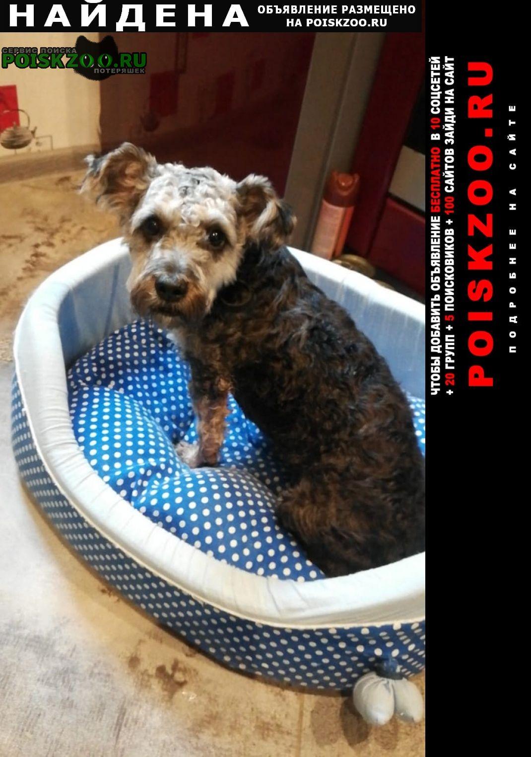 Найдена собака кобель, ищем хозяев Климовск