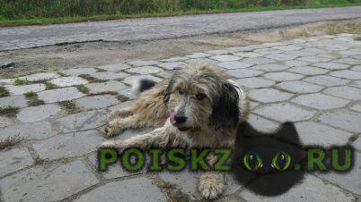 Найдена собака ласковая и добрая  г.Подольск