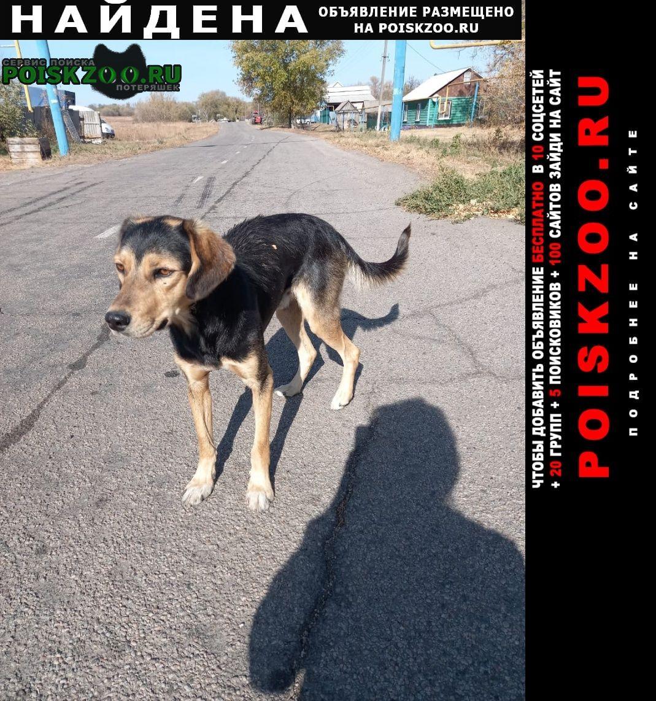 Короча Найдена собака в селе мальцевка