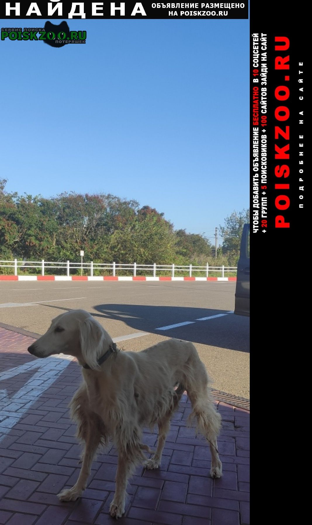 Найдена собака порода салюки Анапа