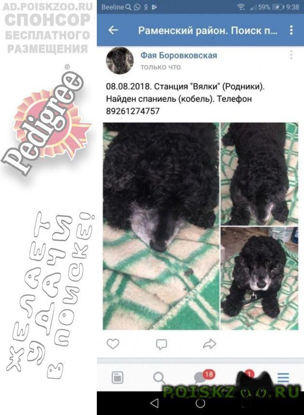 Найдена собака кобель спаниель. г.Раменское