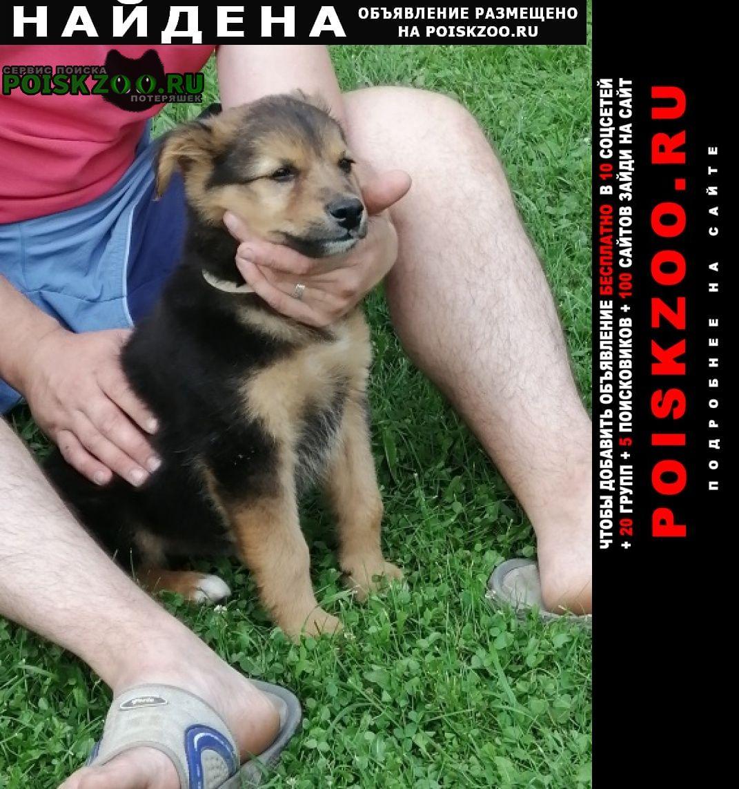 Найдена собака Дзержинский