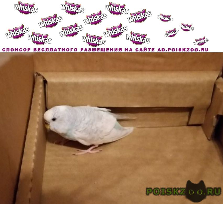Найден попугай г.Москва
