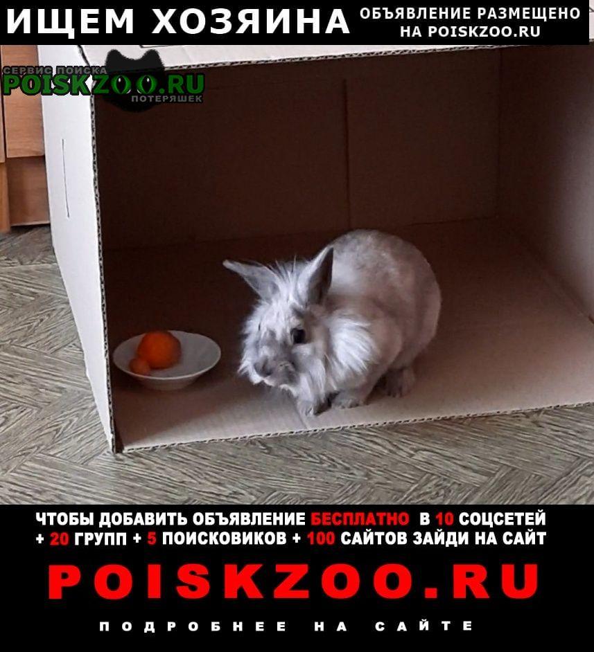 Волгоград Найдено домашнее животное кролик