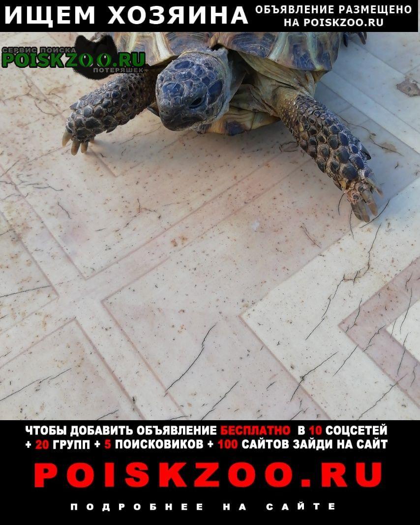 Найдено домашнее животное черепаха Оренбург