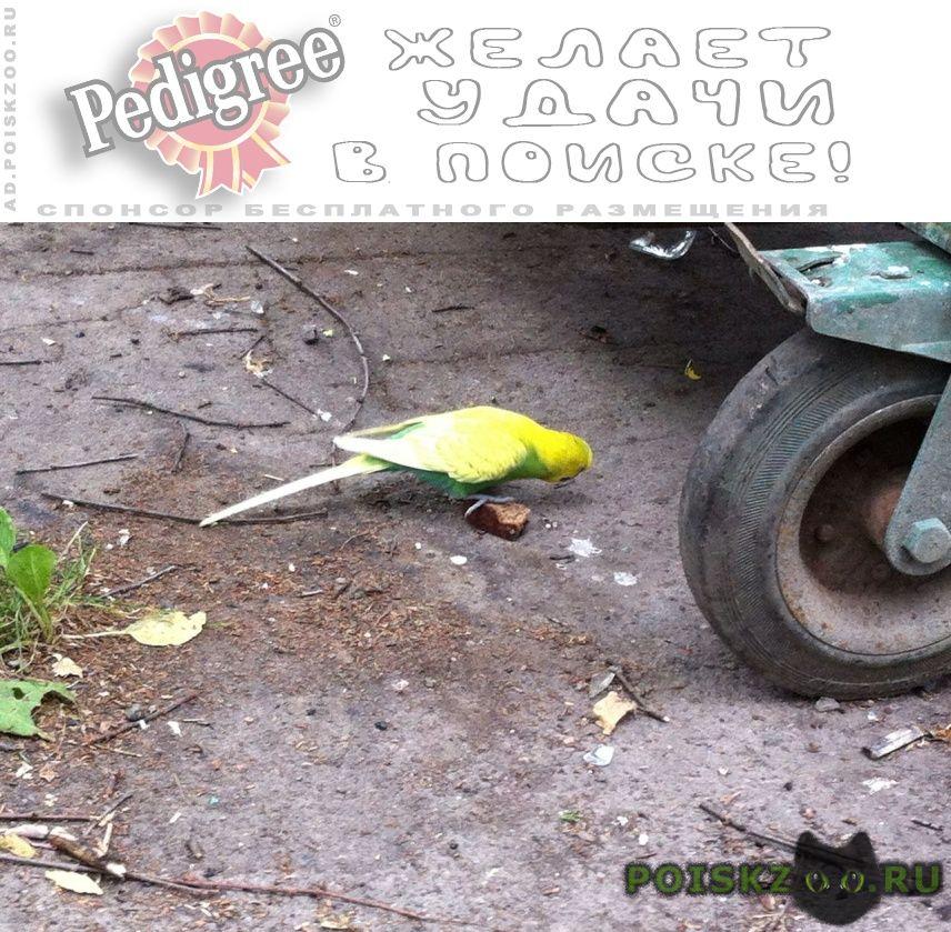 Найден попугай волнистый г.Санкт-Петербург