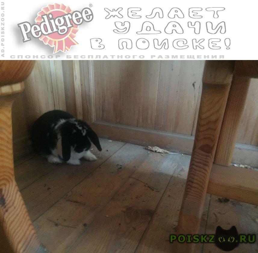 Найдено домашнее животное вислоухий кролик г.Омск