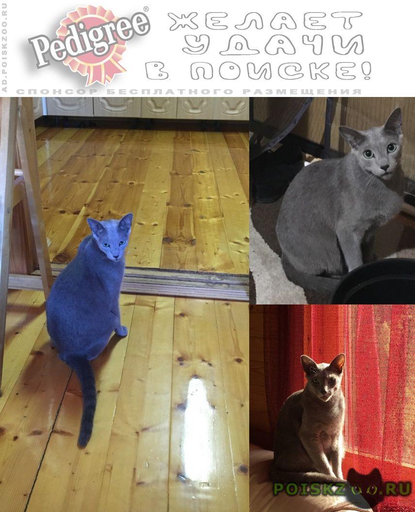 Найден кот русская голубая г.Москва