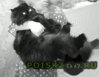 Пропала кошка г.Гусь Хрустальный