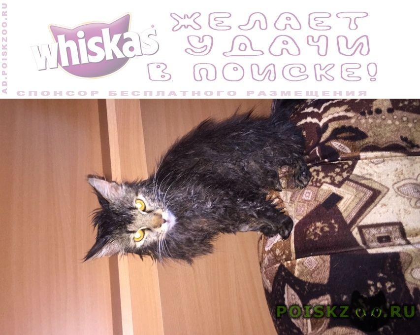 Пропал кот по кличке кузя г.Уфа