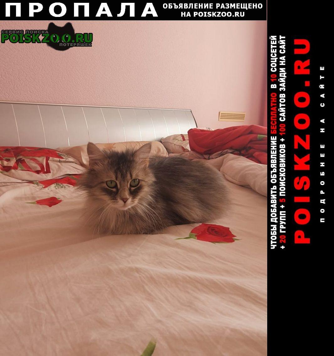 Пропала кошка на горной поляне Волгоград