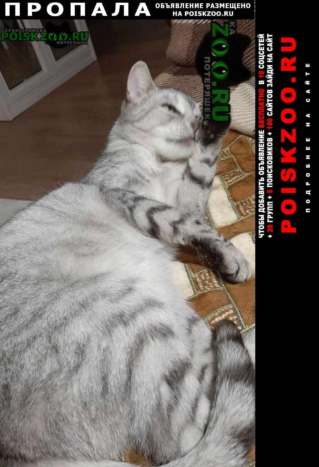 Ликино-Дулево Пропала кошка