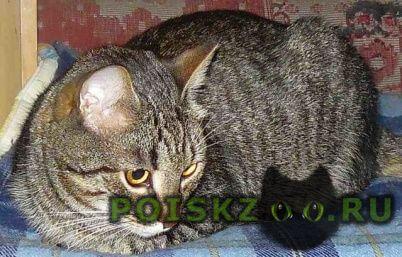 Пропала кошка район пятерка г.Ярославль