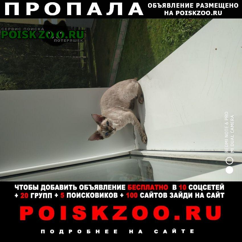 Нижневартовск Пропала кошка
