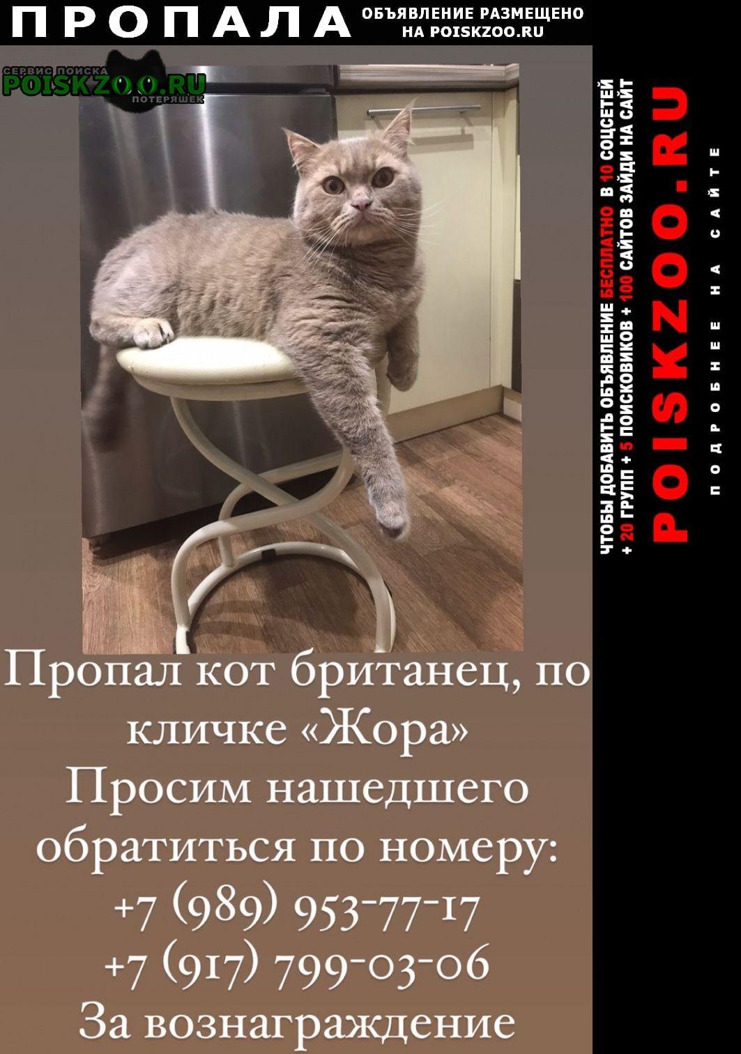 Пропал кот Уфа
