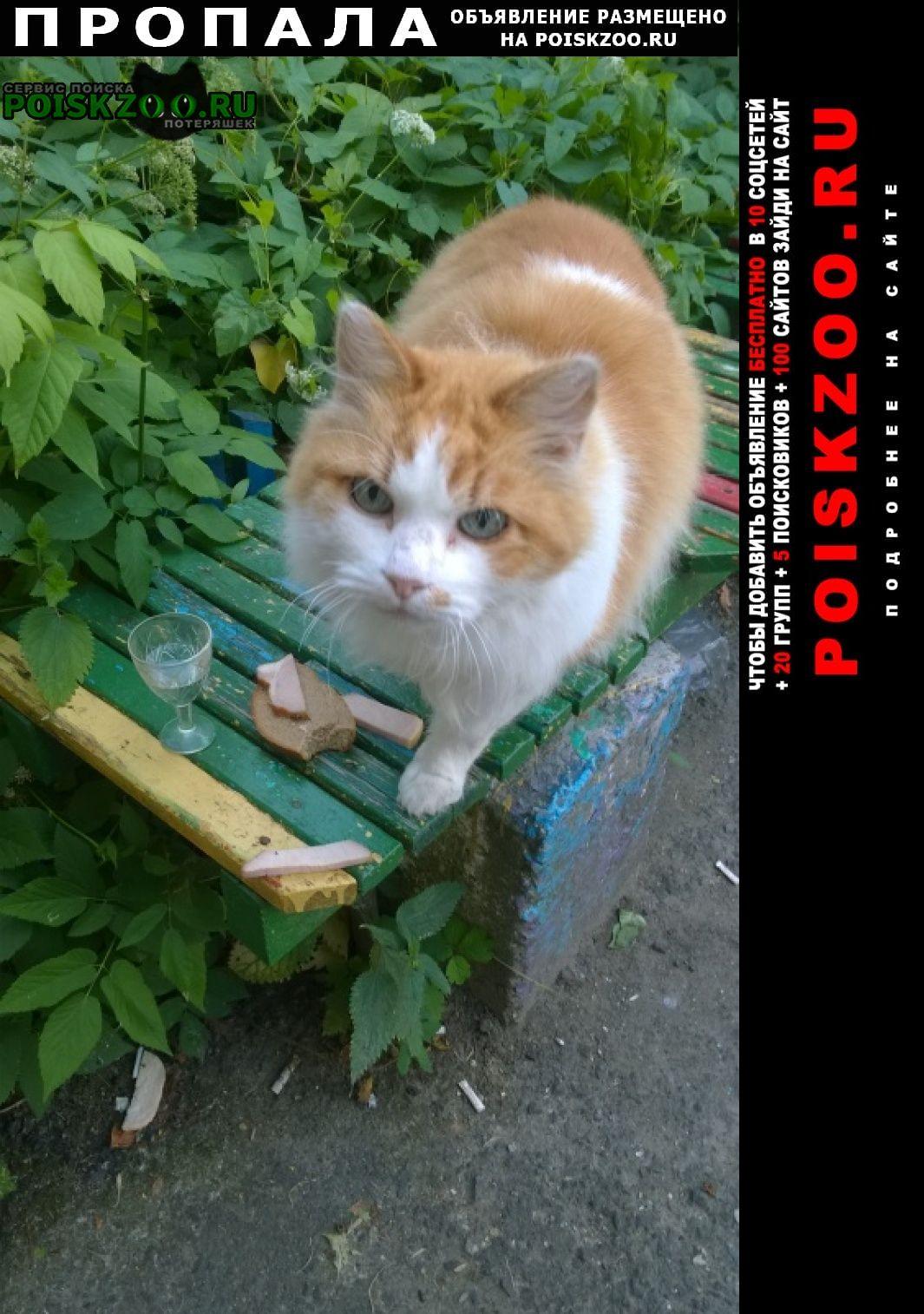 Витебск Пропал кот